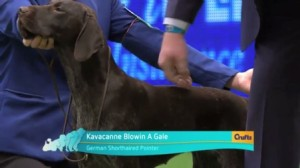 best-of-breed-crufts-2015