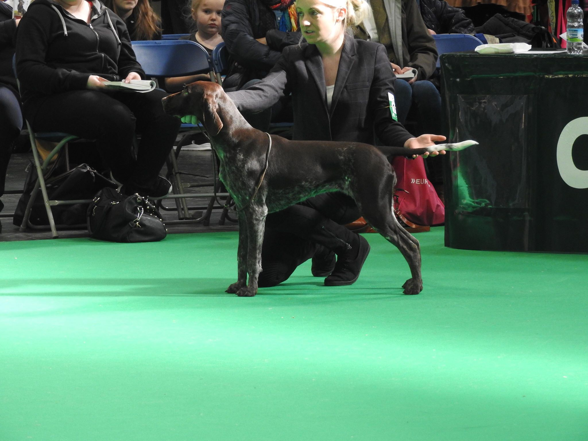crufts 2018 results